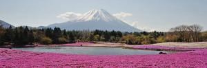 富士芝桜まつり2015GW営業時間