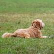 犬が熱中症になった場合の症状とは?