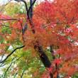 紅葉 東京 公園