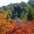京都 永観堂 紅葉 見どころ