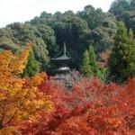 京都永観堂 紅葉の見どころは?ライトアップと混雑攻略法