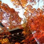 京都の紅葉が11月上旬でも楽しめるスポットはある?
