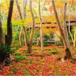 京都紅葉で混雑しないアクセスの良い穴場スポットを厳選