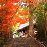 京都鈴虫寺の縁結び効果は?お願いの仕方やお礼の方法
