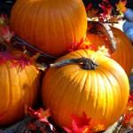 ハロウィン用かぼちゃの保存方法 日持ちさせるやり方とは?