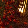 関東 紅葉 ライトアップ