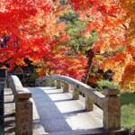 秋の京都で格安グルメを楽しむ 祇園 清水寺周辺の穴場なお店