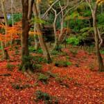 京都の散り紅葉の名所めぐり 混雑しない12月上旬がおすすめ