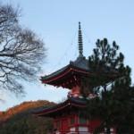 京都 大覚寺の紅葉の混雑具合と見どころ ライトアップ情報