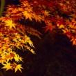 京都 紅葉 ライトアップ 電車